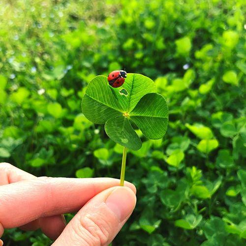 Close-up of ladybug on hand holding leaf