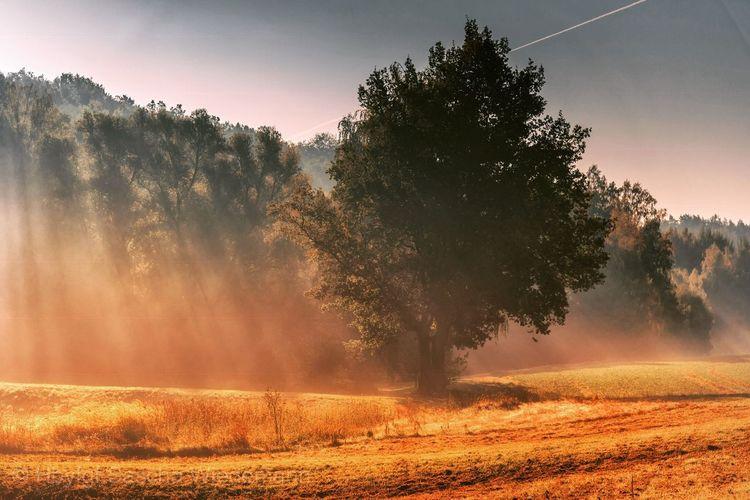 Foggy Moments