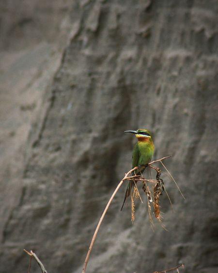 蜂虎 Blue-tailed Bee-eater Bird Nature Taking Photos 巧家 Landscape Animal Photography Hello World Travelling