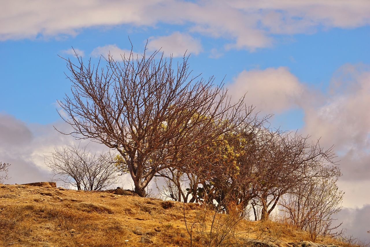 nature, beauty in nature, sky, tree, tranquility, outdoors, day, bare tree, no people, tranquil scene, cloud - sky, low angle view, branch, scenics, landscape