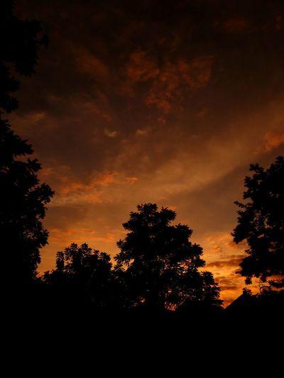 🌇 Tree Sunset
