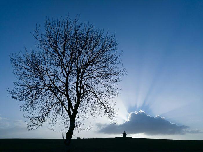 Huawei P9 Trees Sky Waiting