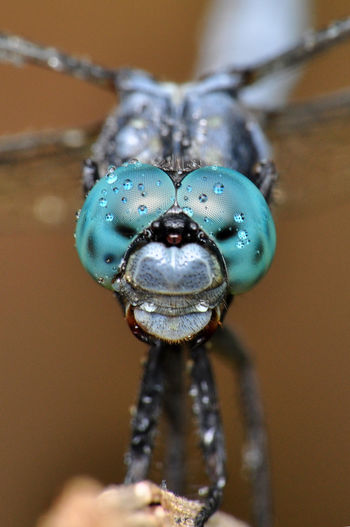 Dragonfly Rain Animal Animal Body Part Animal Eye Animal Head  Animal Themes Animal Wildlife Animals In The Wild Beetle Close-up Day Drop Extreme Close-up Focus On Foreground Indoors  Insect Invertebrate No People One Animal Purity Selective Focus Turquoise Colored Water