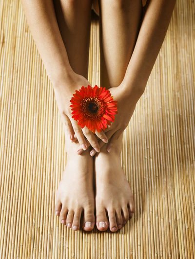 Low section of woman with red gerbera daisy sitting on floorboard