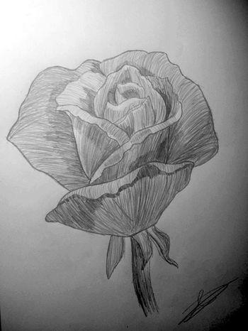 Roses ArtWork That's Me