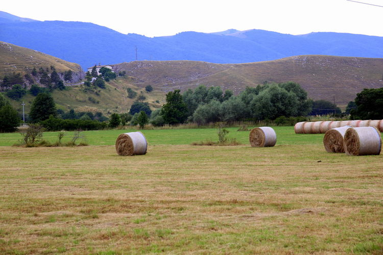 Rolls of hay scattered in the fields after the harvest, with the background of the mountains