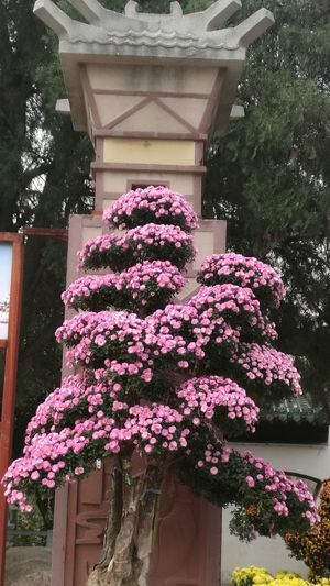 Flower Plant Outdoors No People Architecture Built Structure Day Growth Tree Nature Building Exterior Flowerbed Window Box Beauty In Nature