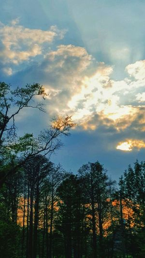 :) a_e s(] Tree Sunset Pixelated Multi Colored Sky Cloud - Sky