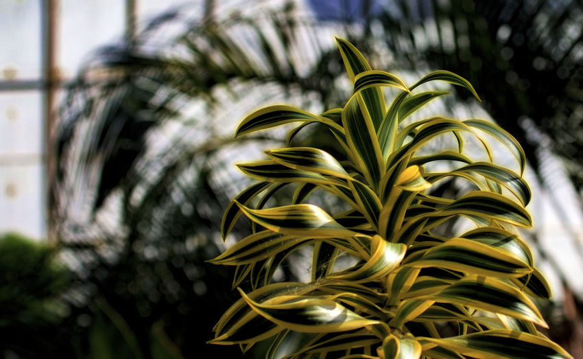 Tropical growth Hothouse Flowers Close-up Day Focus On Foreground Growth Leaf Nature No People Palm Tree Tree Tropic Plants