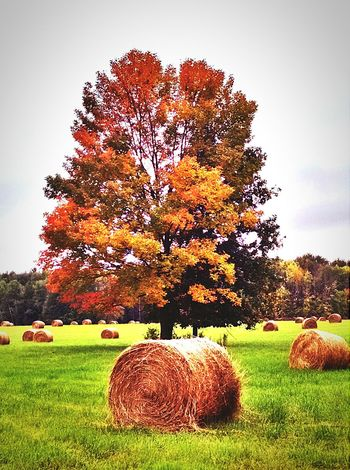 Autumn Colors Nature My Running View Country Life