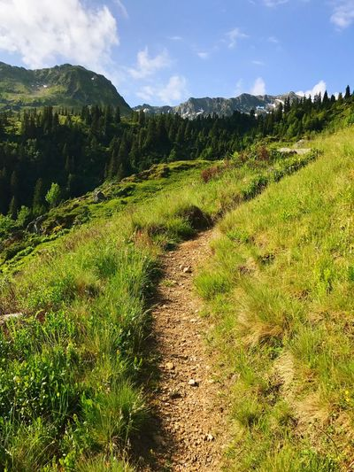 Trail Hiking Trail Path Nature Landscape Grass Tranquility The Way Forward Tranquil Scene Beauty In Nature Scenics Sky Mountain No People Day Outdoors