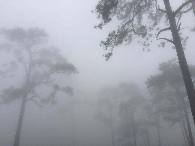 Foggy day at Phu Kradueng, Loei, Thailand Nature Sky Tranquility Fog Beauty In Nature Scenics Wet