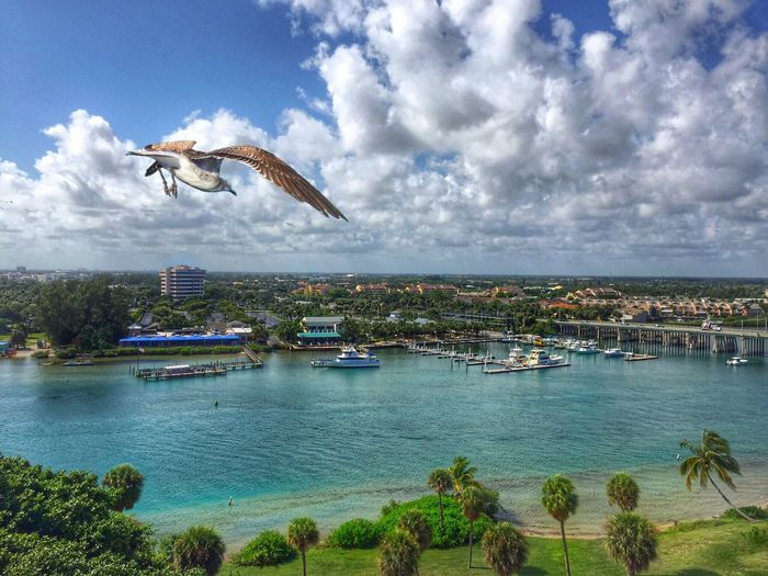 A birds eye view from the top of the Jupiter Lighthouse, FL. Bird Birds' Eye View Higher Perspective Lighthouse_captures Outdoors Scenics Tropical Climate Vantage Point Shot Waterfront Weekend Activities