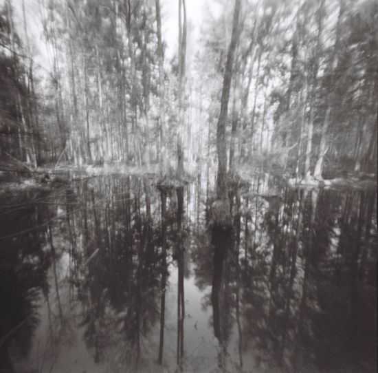 Mopinhole Pinhole Forest Blackandwhite Film Plant Forest Growth Tranquility Land No People Reflection Nature Day Beauty In Nature Scenics - Nature Water Lake Tranquil Scene Non-urban Scene Outdoors Idyllic