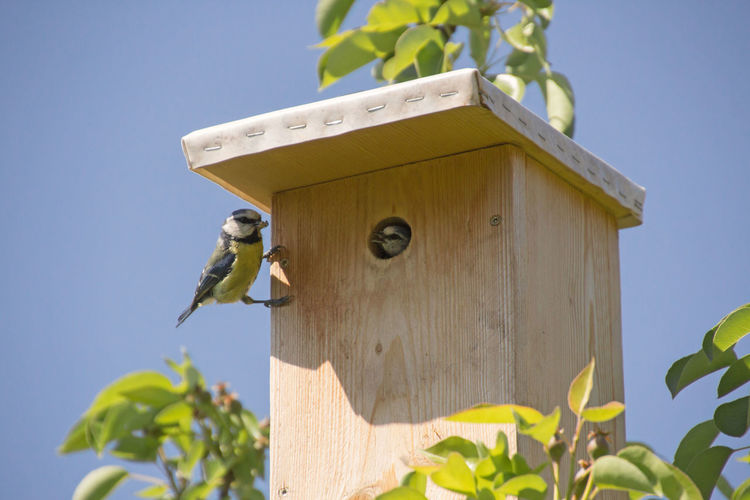 Low angle view of bird perching on birdhouse against sky