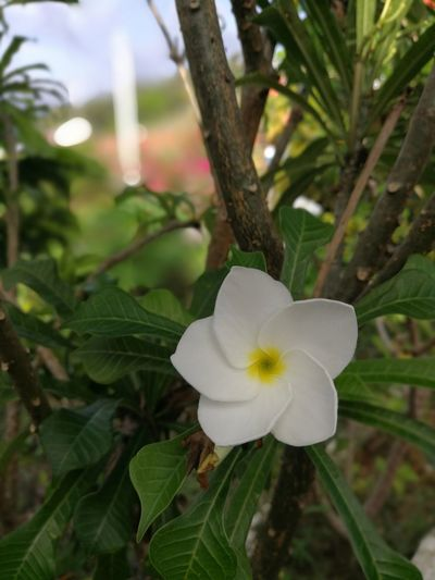 Flower Flower Head Petal Nature Freshness Growth Plant Fragility Tree Leaf Close-up