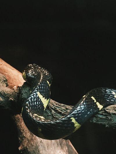 Close-up of a bird on hand