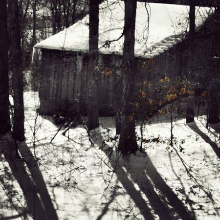 Kentucky barns love them most