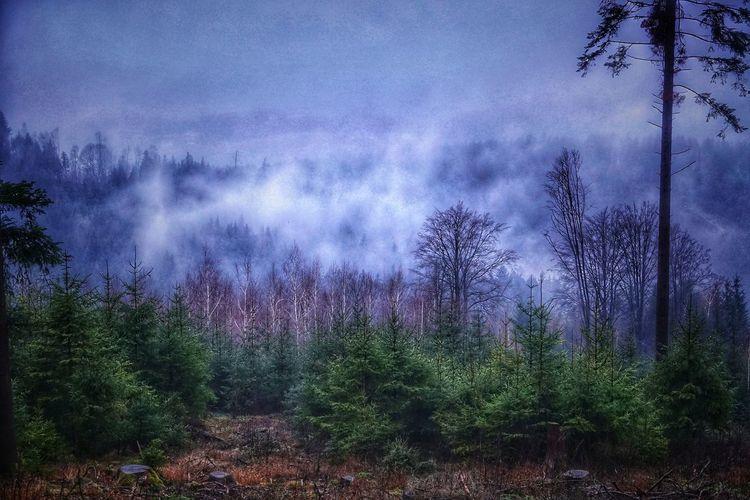 Wald in Wolken