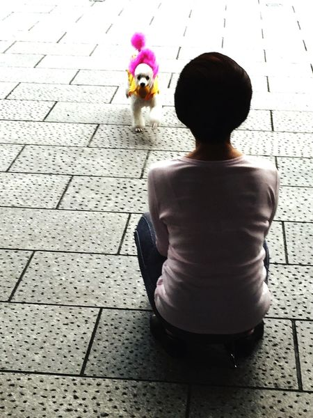 日本老妇人与她的伴