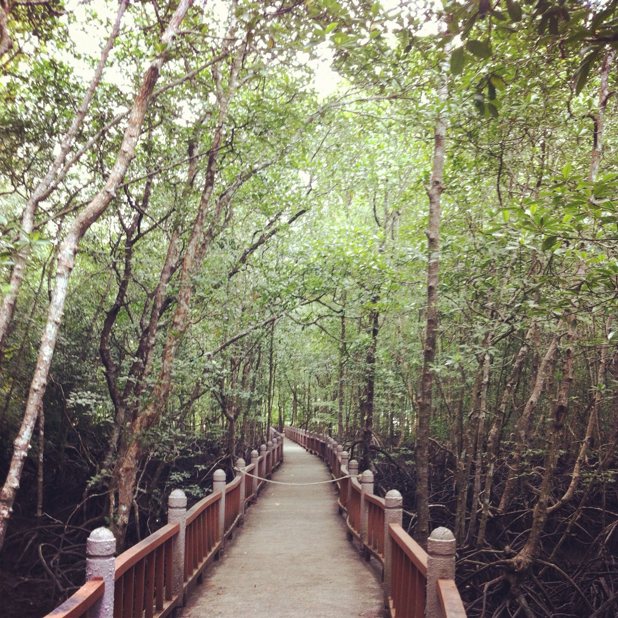 tree, the way forward, forest, railing, growth, diminishing perspective, tranquility, footbridge, nature, walkway, vanishing point, tranquil scene, green color, branch, wood - material, narrow, beauty in nature, pathway, footpath, boardwalk