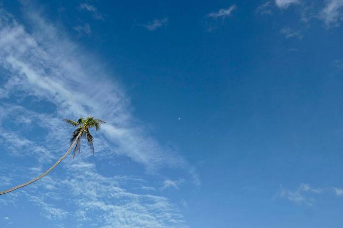 ... tan alta como la luna 🎶🎶 EyeEmNewHere Tree Palm Tree Palmera Moon Cloud - Sky Clouds And Sky A New Beginning Blue Sky