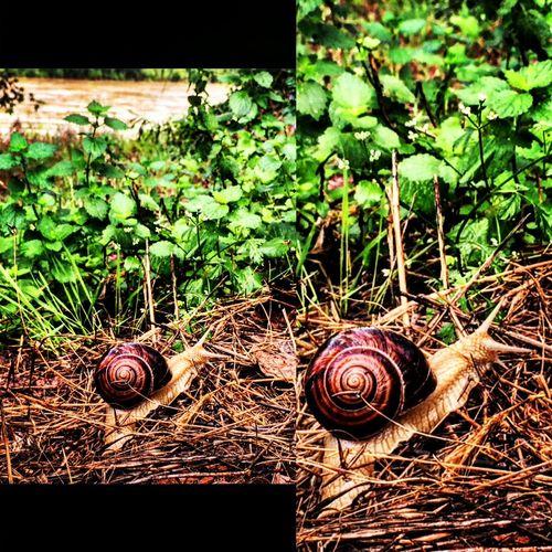 Salyangoz Snail Doğa Nature