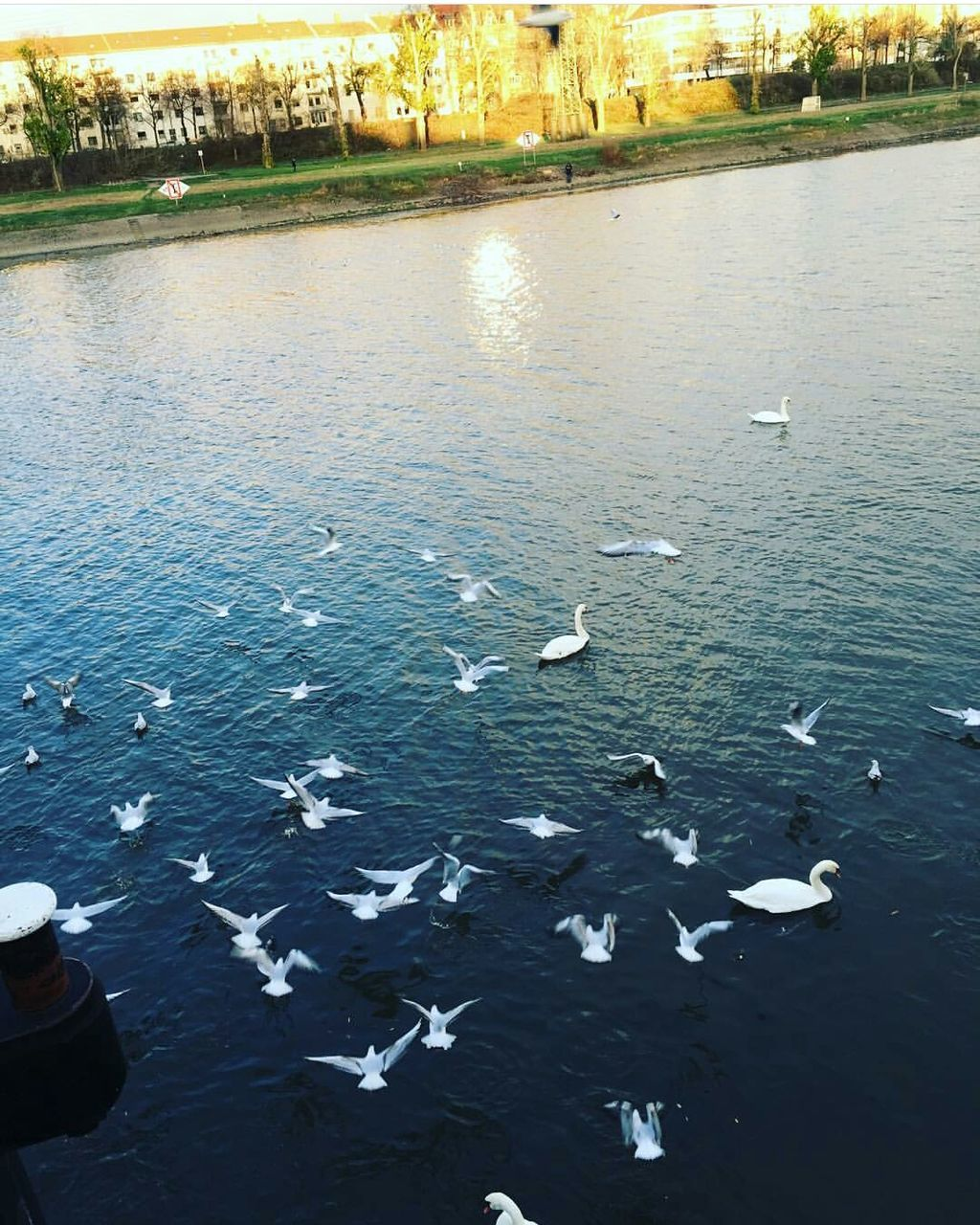 large group of animals, animal themes, water, high angle view, animals in the wild, swimming, nature, day, no people, animal wildlife, outdoors, beauty in nature, swan, bird