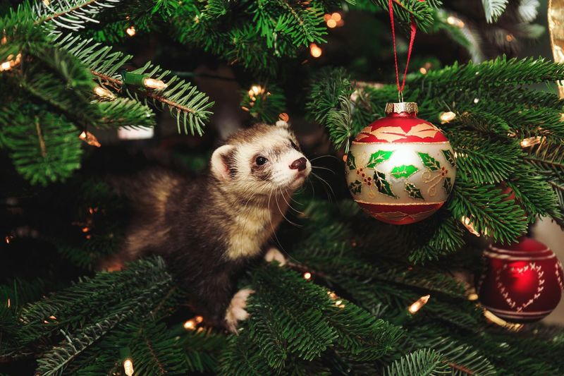Close-Up Of Weasel On Christmas Tree