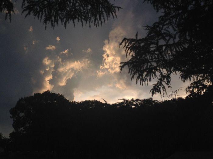 Angry sky. Tree