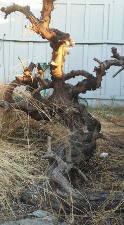 Broken Brown Building Exterior Day Destruction Dirt Dirty Fire Hazard Ground I See Green People LoungeSinger NevieSticks No People Obsolete Old Buildings Personificationoftrees Ruined Shrub Singingtree StevieNicks Sticks Tree Branches Wood Wooden Posttraumatic Pictures