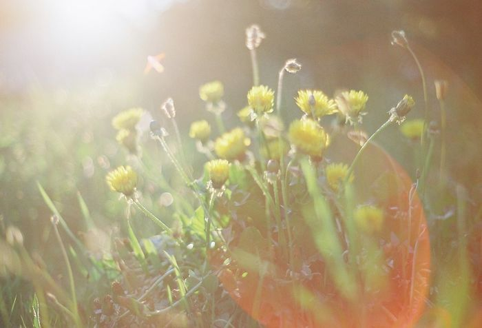 Olympus OM-1 EyeEm Best Shots 35mm Film EyeEm Nature Lover Film Japan Filmphotography Photo