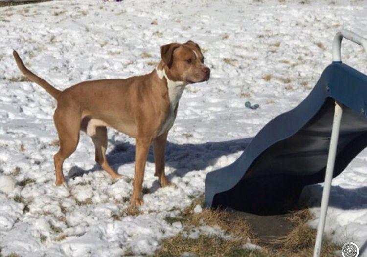 🔎: Sammy♡ Rednose Pitbull Dog Familypet Pets