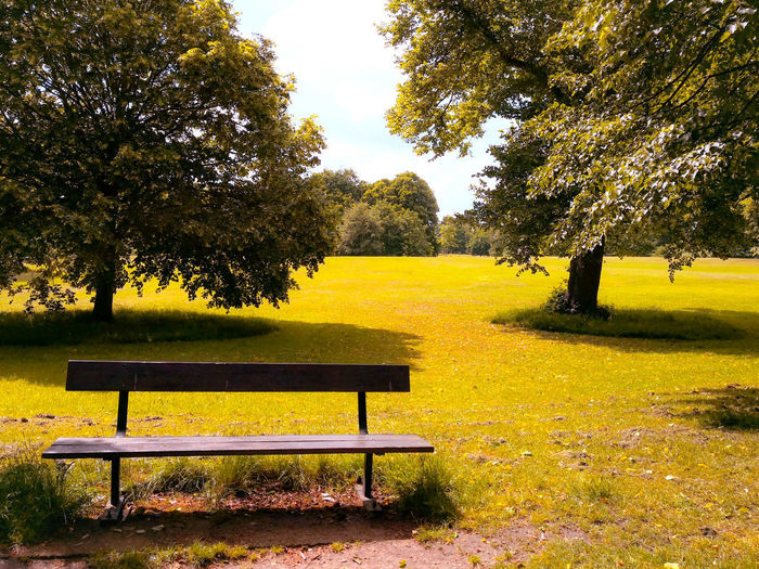 The quite moment Tree Park - Man Made Space Yellow Seat Shadow Grass Sky Landscape Park Bench Bench Park