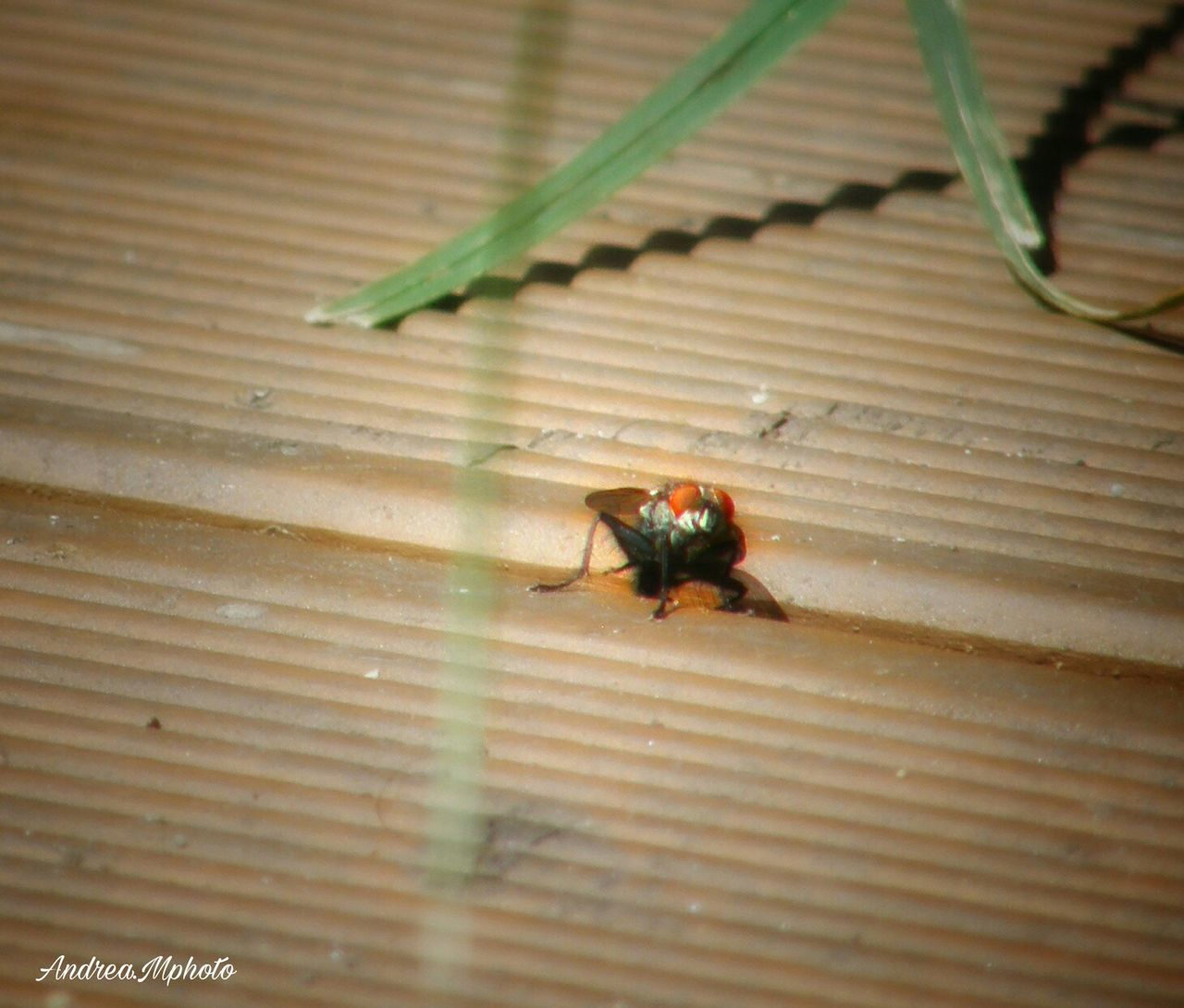 animal themes, animals in the wild, one animal, insect, animal wildlife, wildlife, spider, no people, close-up, wood - material, day, indoors, nature