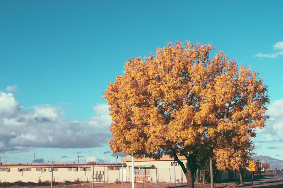 It's just another yellow tree Architecture Autumn Beauty In Nature Building Exterior Built Structure Change City Cloud - Sky Day Growth Low Angle View Nature No People Outdoors Photography Scenics Sky Tree