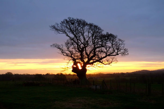 Sky Sunset Silhouette One Person Scenics - Nature Tree Beauty In Nature Field Plant Tranquility Land Orange Color Environment Tranquil Scene Nature Cloud - Sky Landscape Real People Bare Tree Standing Outdoors Branches And Sky South Downs National Park