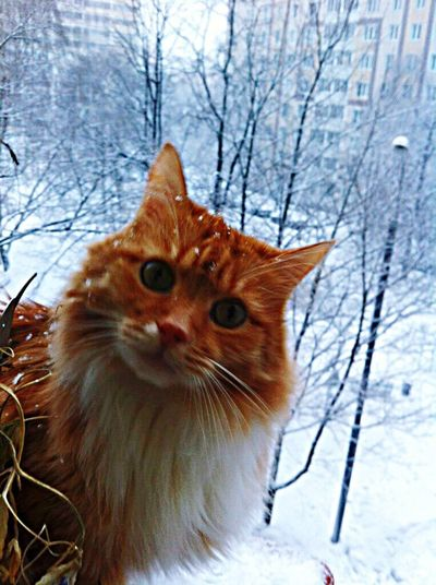 Snow Sports Cat Ginger Cat Domestic Cat Domestic Animals Pets Animal Themes One Animal Looking At Camera Outdoors Green Eyes