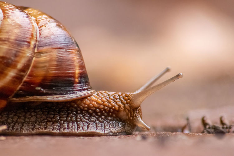 Close-up side view of snail