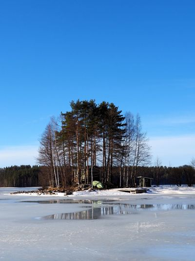 Taken on March 30th, 2019. Saimaa Lake Saimaa Landscape Blue Sky Birches Birch Tree Birch Pine Tree Pine Trees Reflection Cottage Outdoors Non-urban Scene Day Water Clear Sky Frozen Land No People Beauty In Nature Blue Scenics - Nature Tranquility Tranquil Scene Nature Snow Winter Sky Plant Cold Temperature Tree Copy Space