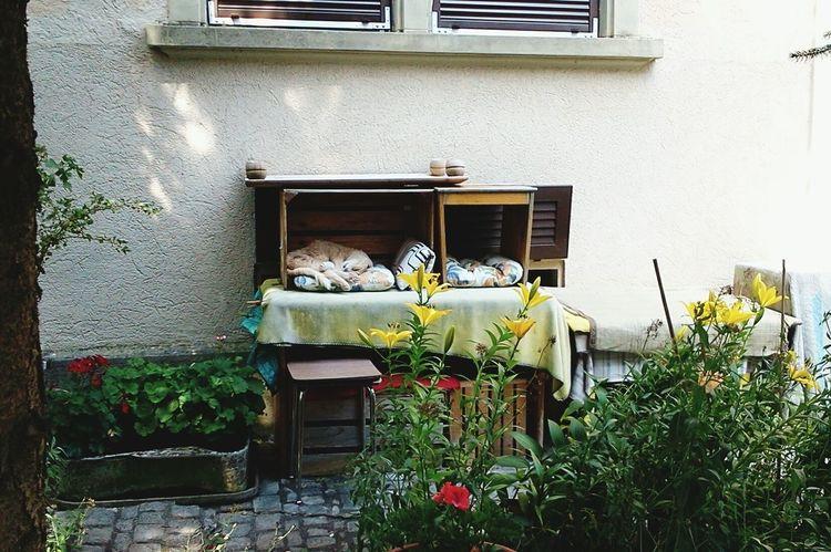 Siesta au Jardin Relaxing