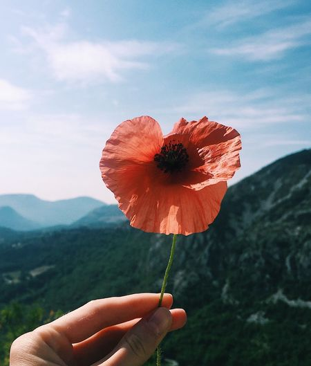 Cropped hand holding red poppy flower against sky