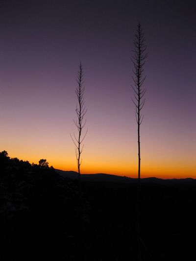 Arizona Agave Arid Climate Beauty In Nature Growth Landscape Nature Night No People Outdoors Scenics Silhouette Sky Sunset Tranquil Scene Tranquility