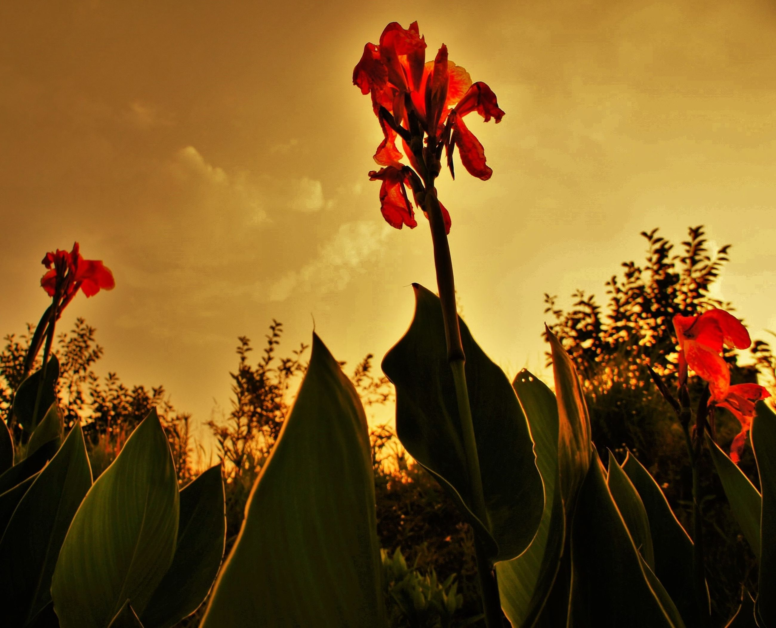 growth, flower, red, freshness, plant, beauty in nature, leaf, nature, fragility, sky, orange color, stem, petal, sunset, flower head, close-up, low angle view, blooming, outdoors, sunlight