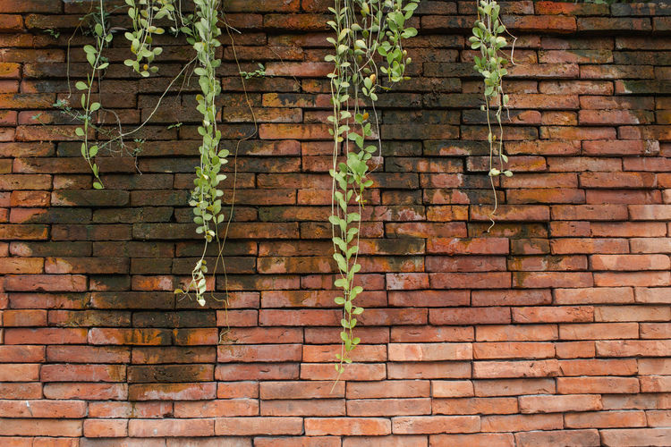 Antique Brick Wall Green Lichen Plant Tree Wall Background Brick Ivy Moss Old Pattern Texture Vintage