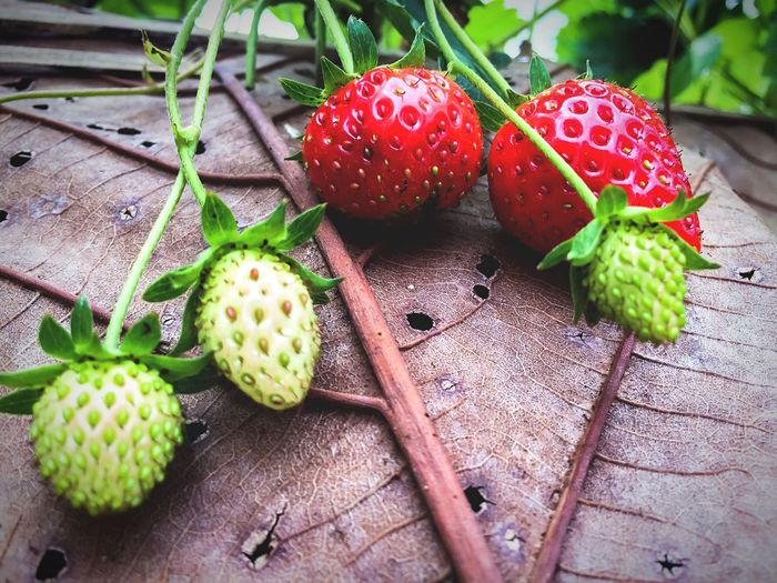 Freshness strawberry 🍓 Healthy Eating Food Food And Drink Fruit Freshness Wellbeing Green Color No People Close-up Red Strawberry Plant Nature