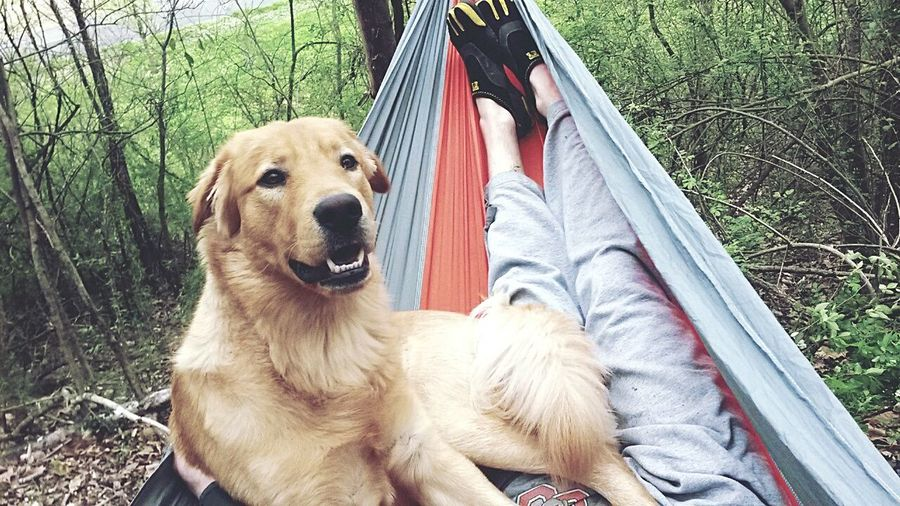 Me and my bud relaxing in the hammock. Dog Pets Relaxation Outdoors Nature Dog Love Dog Life L Love My Dog Hammocking Out Hammock_life