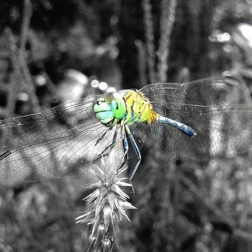 Arab_hdr Allunique_pro Bns_macro Bestnatureshot Bns_nature Coloursplash Closeup Ig_closeup Ig_macro Ig_bugs Macro_creature_feature Macro Nature Natureperfectt Picsart SquidCam Tgif_macro Tgif_nature Terrificphoto