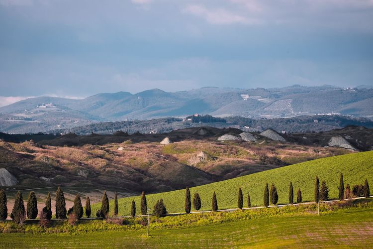 Scenic view of cypresses line against clay hills and mountains background