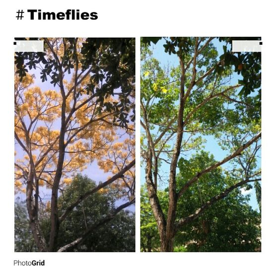 Everytime I look at a tree I always remember the poem Trees by Joyce Kelmer. Nofilter Treescollection Timefliessofast Taking Photos